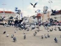 Puls grada Zagreba