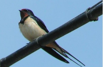 Suvremenim stilom života čovjek ugrožava pticama selicama staništa i seobe