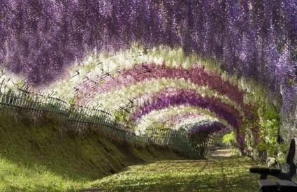 tunel_wisteria.jpg