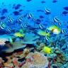 Veliki koraljni greben spašava se milijardom dolara