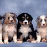 Psi žive s ljudima već 11 tisuća godina