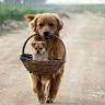 Mujo i Fatin pas