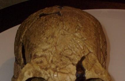 Prvi primjerak je otkriven 1972. godine