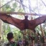 Peruanska vojska uhvatila leteću Chupacabru?