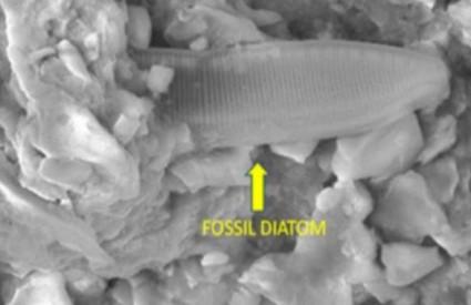 Mali fosil mijenja sve