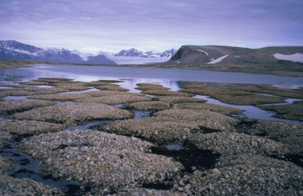 Permafrost se otapa, bude se opasne bakterije i virusi