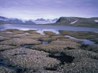 Hoće li permafrost dovesti novu pandemiju?
