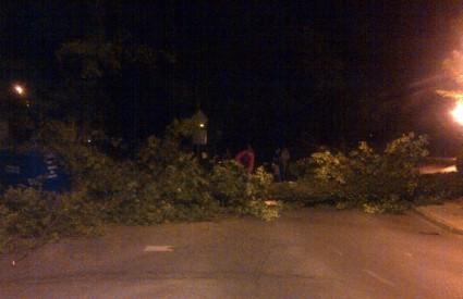 Stablo je palo na Nazorovu