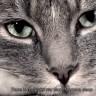 Mačke tamane gmazove u Australiji