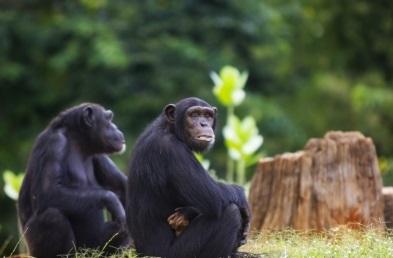 Majmuni razmišljaju jednako :)