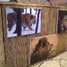 Sjajna izložba Big Cats u Avenue Mallu