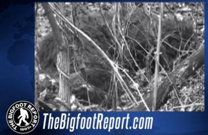 Usnula ženka Bigfoota?