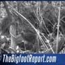Jesu li napokon dokazali da Bigfoot postoji?