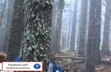Izvanzemaljac u šumi kraj Plovdiva
