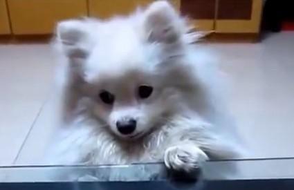 Nitko vas ne može dočekati kao pas :)