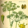 Liječite kašalj prirodnim lijekovima poput papra