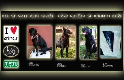Još četiri dobra psa za udomljavanje