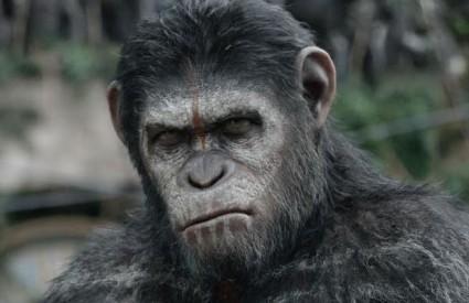 Majmuni zavladali kinima