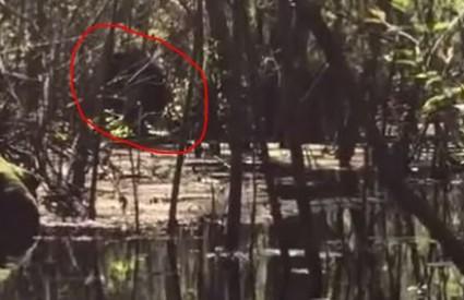 Brčkanje među aligatorima?