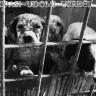 Međunarodni dan napuštenih životinja