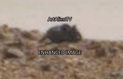 Glodavac na Marsu ili igra svjetla i sjene?