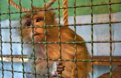 Splitski zoološki vrt bio je sramota Hrvatske