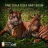 Discovery Communications za spas tigrova