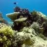 Veliki koraljni greben je - mrtav