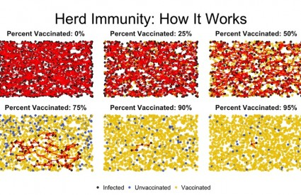 Evo kako funkcionira imunitet krda
