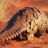 Divljim vrstama i dalje se ilegalno trguje