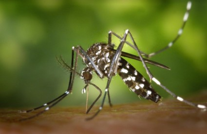 Hoće li Muju ispikati komarci