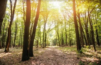 Čuvajmo šume