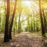 Spasimo svijet sadnjom stabala