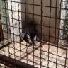 Zoovrt u Zatonu Obrovačkom treba zatvoriti!