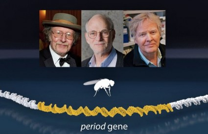 Pronašli su gen koji kontrolira biološki ritam