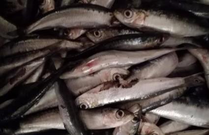 Nema tjedna bez ribe
