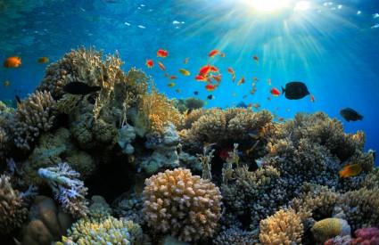 Veliki koraljni greben je u problemu