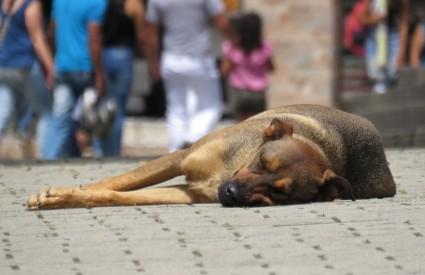 Napuštenih pasa trebalo bi biti manje