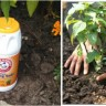 5 načina za korištenje sode bikarbone u vrtu