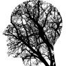 Kako su povezani mozak i inteligencija