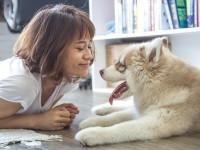 Kako se treniraju psi?