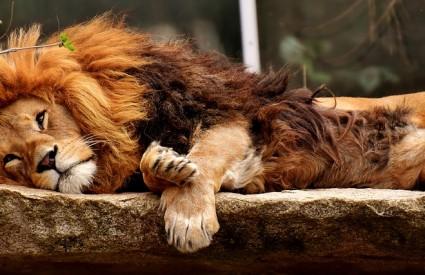 Ne diraj lava dok spava ;)