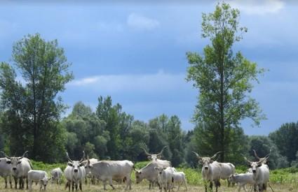 Podolci u Lonjskom polju