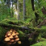 Europska komisija pala kao posljednja  obrana prirode