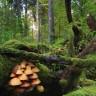 Šume nas umiruju