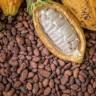 Kakao - biljka kojom se hrane ljudi, a vjerojatno i bogovi