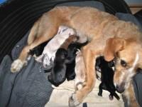 Vlasnički psi jedini su uzrok problema napuštanja