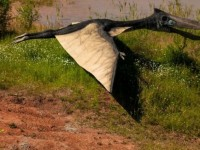 Nova vrsta pterosaura otkrivena u SAD