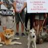 Svjetski dan kastracije za spas pasa i mačaka