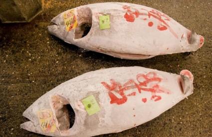 Tune su ugrožene u Atlantiku